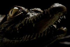 krokodyl Nile Fotografia Stock