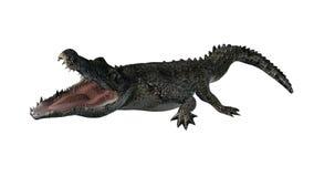 Krokodyl - oddzielający na białym tle Zdjęcia Stock