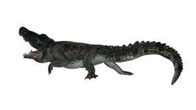 Krokodyl - oddzielający na białym tle Obrazy Stock