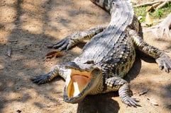 krokodyl rolny Thailand Zdjęcia Royalty Free