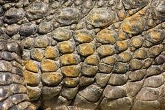 Krokodyl skóra 2 Zdjęcie Stock
