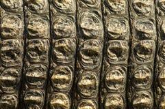Krokodyl skóry tło Zdjęcia Stock