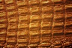 Krokodyl skóry tekstura obraz royalty free
