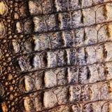 Krokodyl skóry tekstura zdjęcia stock