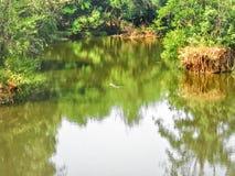 Krokodyl w jeziorze Obrazy Royalty Free