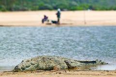Krokodyl w słońcu blisko dwa rybaków w widoku przy Wielkim St Lucia bagna parka światowego dziedzictwa miejscem, St Lucia, Połudn Obrazy Royalty Free