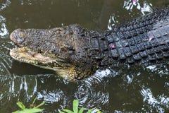 Krokodyl w tropikalnym Bali wyspy zoo, Indonezja fotografia royalty free