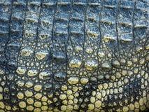 krokodyla czerwony skóry kolor żółty obraz stock