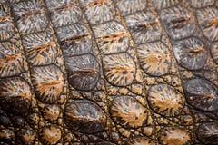 krokodyla czerwony skóry kolor żółty Obrazy Stock