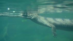 Krokodyla dopłynięcie Pod wodą Obraz Royalty Free