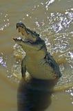 Krokodyla dopłynięcie w Adelaide rzece obrazy royalty free