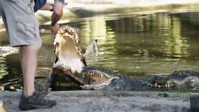 Krokodyla mężczyzna przy brzeg rzekim, Costa Rica zdjęcie wideo