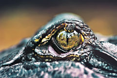 krokodyla oko Fotografia Royalty Free