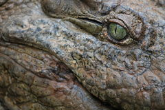 Krokodyla oko Obrazy Royalty Free