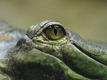 Krokodyla oko Obraz Royalty Free