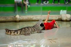 Krokodyla przedstawienie, mężczyzna niebezpieczeństwo przy krokodyla zoo i ekscytować i Obraz Stock