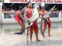Krokodyla przedstawienie przy krokodyla gospodarstwem rolnym Zdjęcia Stock