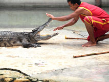 Krokodyla przedstawienie przy krokodyla gospodarstwem rolnym Fotografia Stock