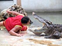 Krokodyla przedstawienie przy krokodyla gospodarstwem rolnym Zdjęcia Royalty Free