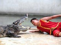 Krokodyla przedstawienie przy krokodyla gospodarstwem rolnym Obraz Stock