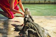 krokodyla przedstawienie Thailand Fotografia Stock