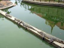 krokodyla rząd Zdjęcie Royalty Free