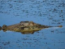 krokodyla saltwater Fotografia Stock