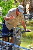 Krokodyla trener karmi Saltwater krokodyla kobiety w Queensla Obraz Royalty Free