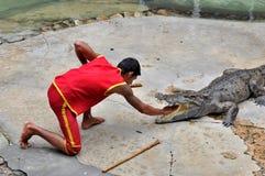 krokodyla występ obraz royalty free