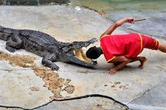 krokodyla występ obrazy stock