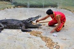 krokodyla występ fotografia stock