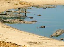 Krokodyle - Kariba jezioro, Zimbabwe Obrazy Stock