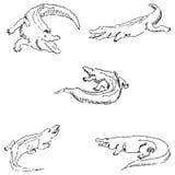 krokodyle Nakreślenie ołówek TARGET688_1_ ręką wektor Obraz Royalty Free
