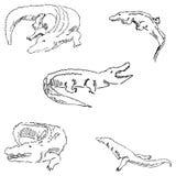 krokodyle Nakreślenie ołówek TARGET688_1_ ręką wektor Zdjęcie Royalty Free