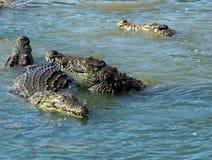 krokodyle niebezpiecznych Zdjęcia Royalty Free