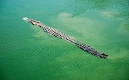 Krokodyle okrutnie zwierzęta 2 Zdjęcie Stock