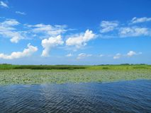 Water, plants and beautiful cloudy sky, Lithuania Royalty Free Stock Images