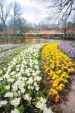 Krokusów kwiatów pole Obraz Stock