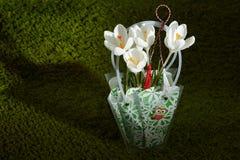 Krokus fjädrar blommor Arkivbild
