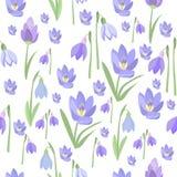 Krokus- und Schneeglöckchennaturschönheitsblumenvektor des Vorfrühlings purpurroter lizenzfreie abbildung