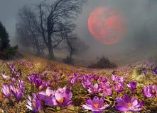 Krokusar är de första blommorna i bergen Arkivbilder