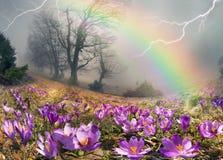 Krokusar är de första blommorna i bergen Arkivfoton