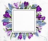 Krokusblume und leere Karte Stockbild