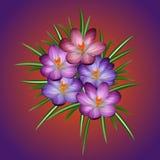 Krokusblumen im Frühjahrsonnenschein vektor abbildung