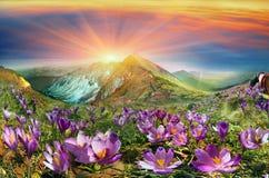Krokusse sind die ersten Blumen in den Bergen Stockfotografie