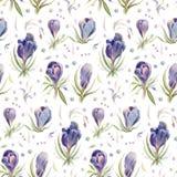 krokussen De bloemen van de de lentewaterverf op een witte achtergrond worden geïsoleerd die Royalty-vrije Stock Afbeeldingen