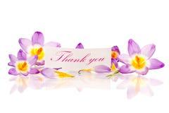 Krokussen met dankbaarheid stock foto