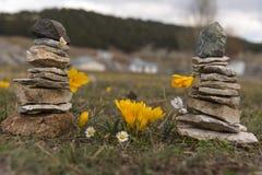 Krokusy w zen kamieniu Obrazy Royalty Free