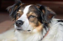 Krom dog Royalty Free Stock Photo
