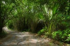 Kromme door de groene wildernis royalty-vrije stock afbeelding